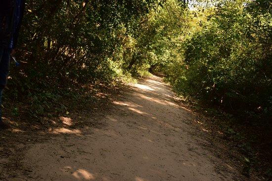Bhitarkanika National Park ภาพถ่าย