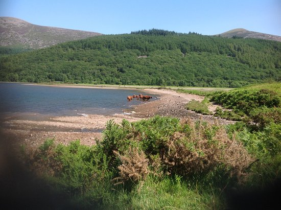 Ennerdale, UK: Top of the lake, and walked back down through the forest on the far side. Total distance 6.5 mil