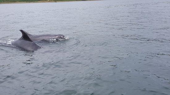 Dolphin Spirit Inverness Image