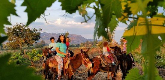 Etna Donkey Trekking