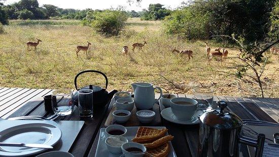 Phinda Private Game Reserve, Zuid-Afrika: Breakfast On Main Lodge Veranda