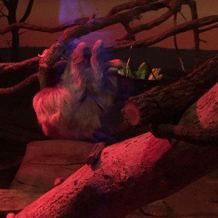 Henry Doorly Zoo: photo7.jpg