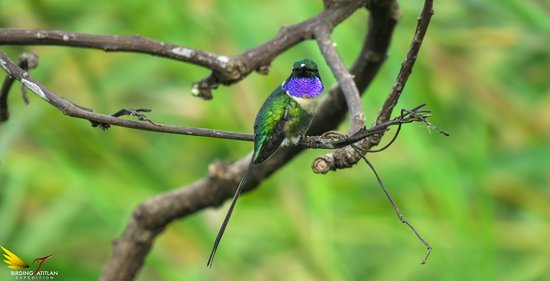 Birding Atitlan Expedition
