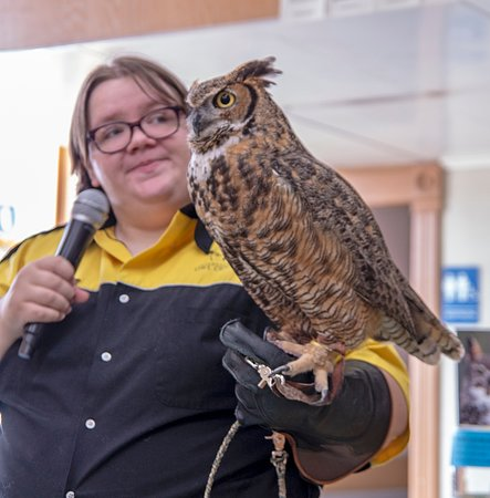 Houston, MN: Educator Jo and Ruby, a Great Horned Owl.