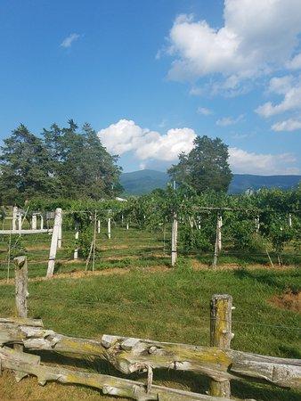 Stanley, VA: Grapevines