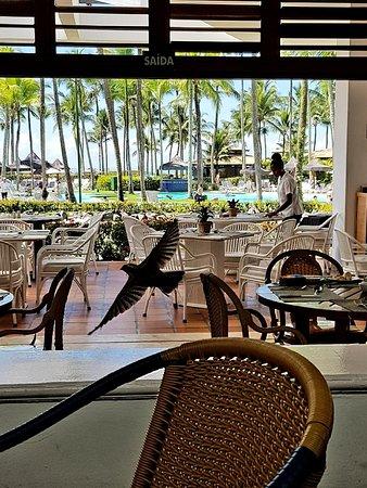 Hotel Transamerica Ilha de Comandatuba: 20180714_215838_large.jpg