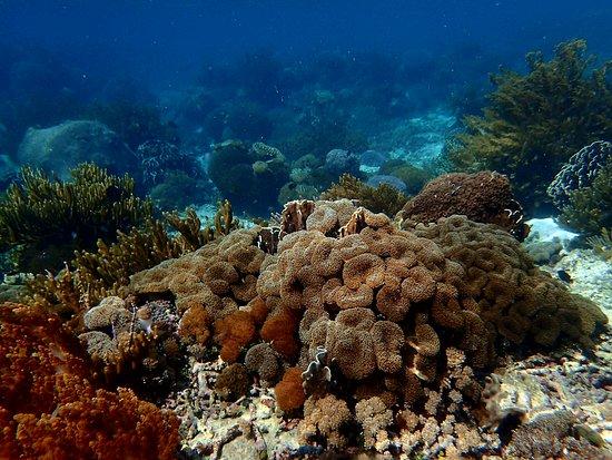 Alor Kecil, Indonesien: Koraalrif