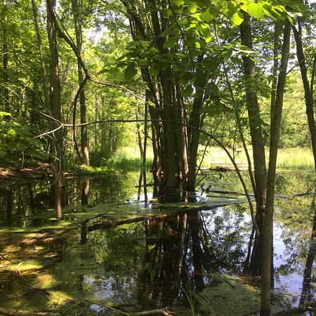 Ephraim, WI: View of the pond from the trail.