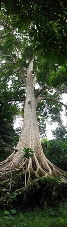 Maoyon River Cruise and Dao Tree Sightseeing Tour