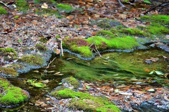 中島台獅子ヶ鼻湿原