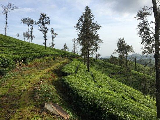 Gudalur Photo