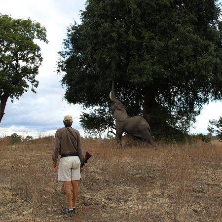 Mana Pools National Park, Zimbabwe: photo0.jpg