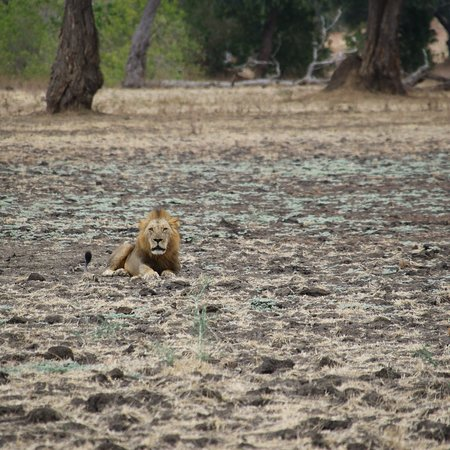 Mana Pools National Park, ซิมบับเว: photo2.jpg