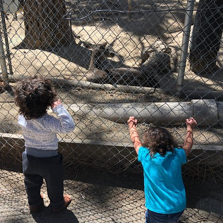Big Bear Alpine Zoo at Moonridge: photo0.jpg