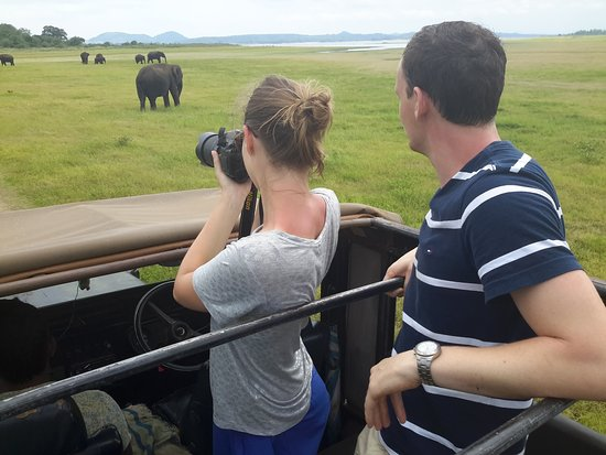 driving a jeep through Minneriya National Park and spotting wild elephants.