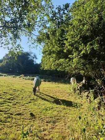 Eldwick, UK: 20180710_182110_large.jpg
