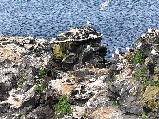 Rishiri-cho, ญี่ปุ่น: 人面岩