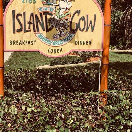 The Island Cow 사진