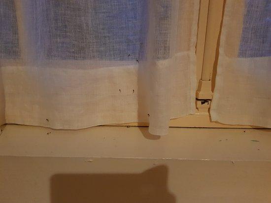 Les Rosiers sur Loire, França: Moustiques morts séchés dans les rideaux et sur les rebords de fenêtre