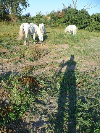 faf139c330bb Brenda Centre de Tourisme Equestre Day Tours (Saintes-Maries de la ...