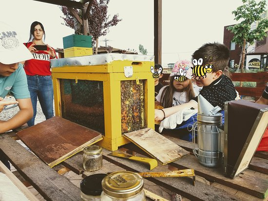 Thermi, Hy Lạp: See the bees in their home behind observation hives made from wood and glass!