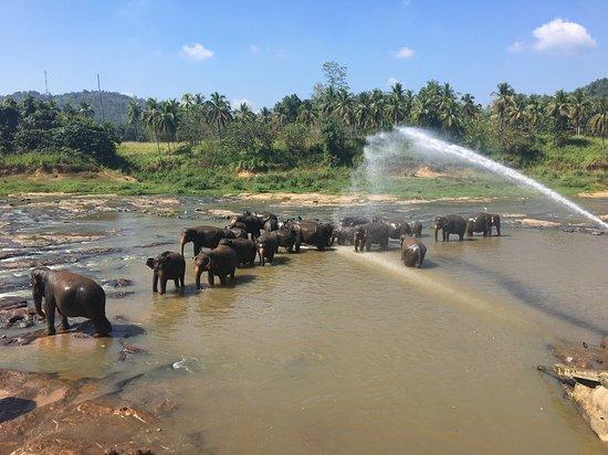 Pinnawala is a heaven for Elephants, We can make friendship with beautiful baby elephants.