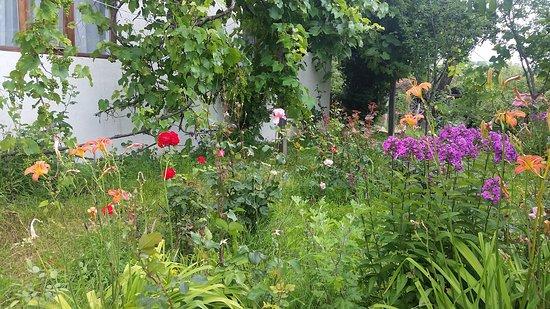 Poiana Marului, Румыния: The flower garden