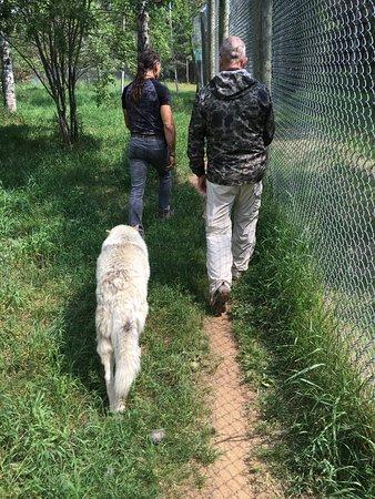 """Girardville, Canada: Gilles est vraiment à l'écoute de """"ses"""" loups et il aide à notre acceptation dans cette meute"""