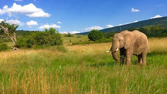 Arlom Kenya Safaris