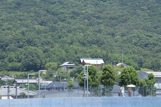 Yashima Rexxam field