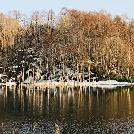 Gekko Pond