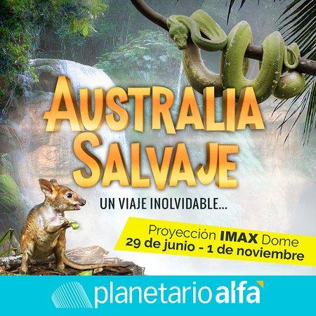 """Planetario Alfa : ¡No te la pierdas en el Domo IMAX! Película """"Australia Salvaje"""" del 29 de junio al 1 de noviembr"""