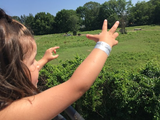 """Mendon, MA: On the """"zip line"""""""