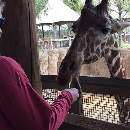 Dallas Zoo: photo6.jpg