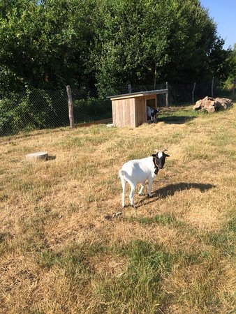 Longueville, Γαλλία: Adorable! Elle nous rendrait chèvre, rire mais ne soyons pas bête! Que de bons moments!!!