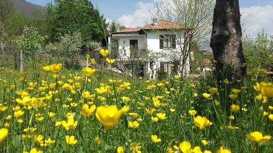 Casale Corte Cerro, İtalya: dal prato