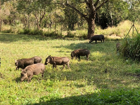 Gorongosa National Park, Mozambique: also outside our room.