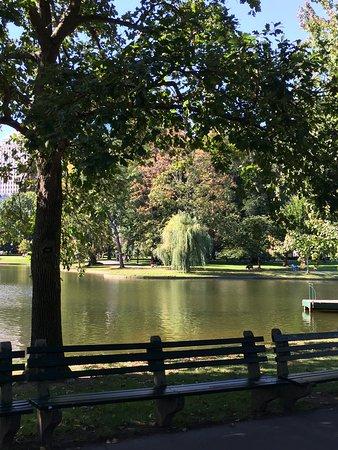 Boston Public Garden: lago