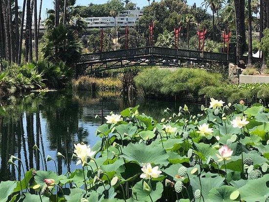Lotus Flowers And The Lakes Bridge Bridge Closed To Visitors