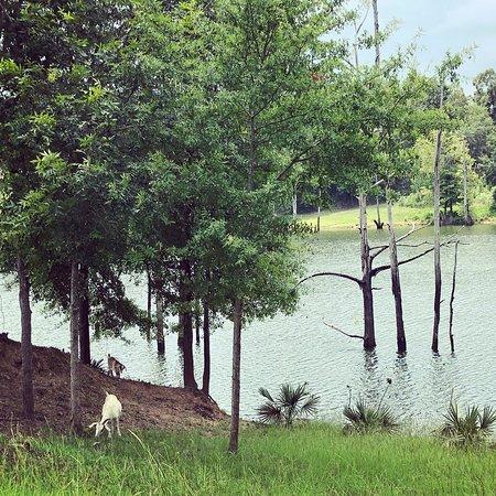 Millbrook, AL: photo3.jpg