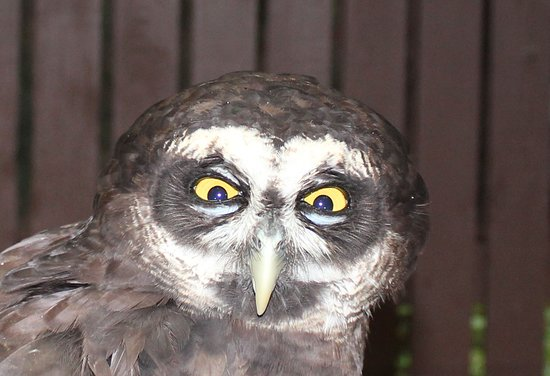 Carolina Raptor Center: WHOO YOOO LOOOKIN AT..