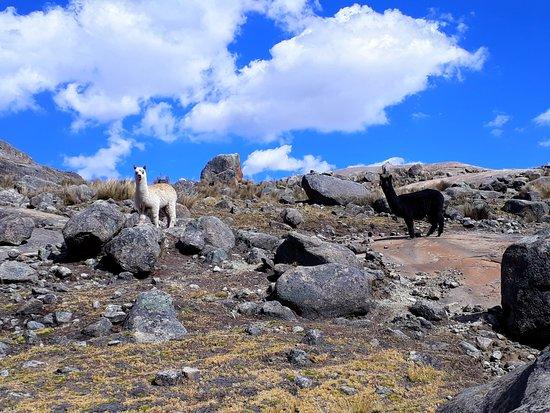 Yauyos, Peru: Apu Pariacaca