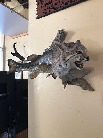 Yampa, Колорадо: Catfish and other interesting taxidermy.