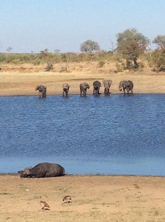 Pabeni Gate Kruger National Park: Final panorama of elephants