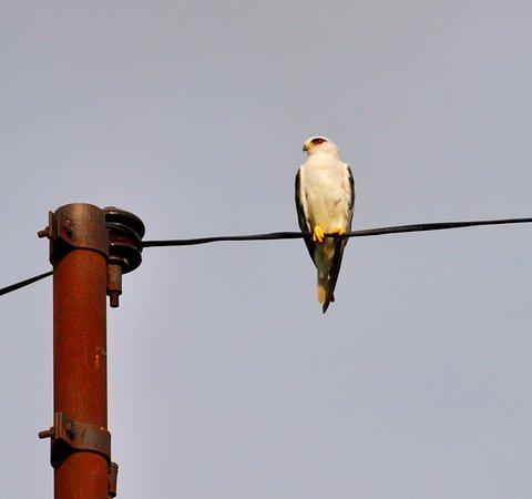 Ramnagar, Indien: 20180716_095225_large.jpg