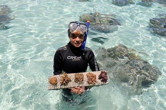 Private Coral Nursery Tour in Bora Bora