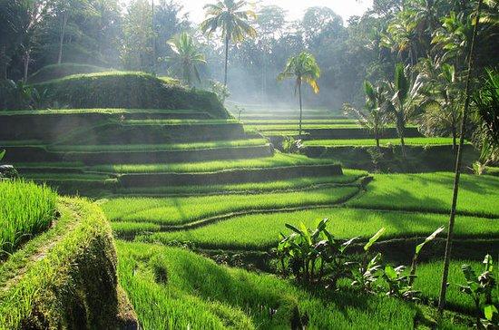 Lo mejor de Ubud Tours: cascada...