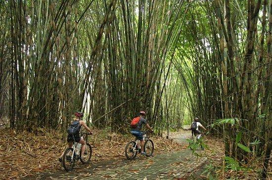Bali Village & Bamboo Forest Visit