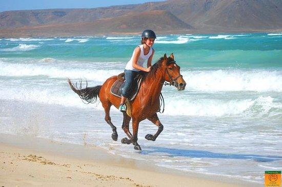 Centro de equitación