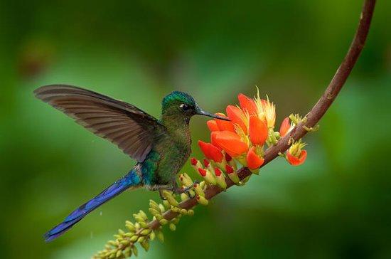 プライベートリザーブの鳥の眺め